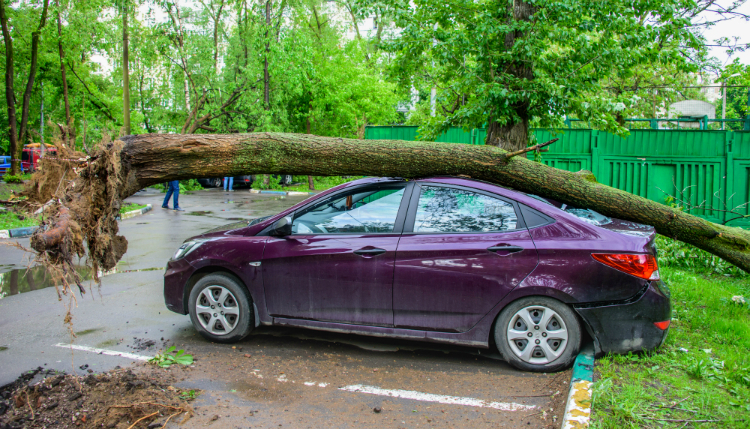 Car crushed by tree exemplifies the importance of Budgeting for surprise expenses.