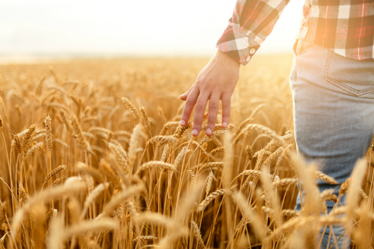 A farmer walks in a wheat field on National Ag Day 2018