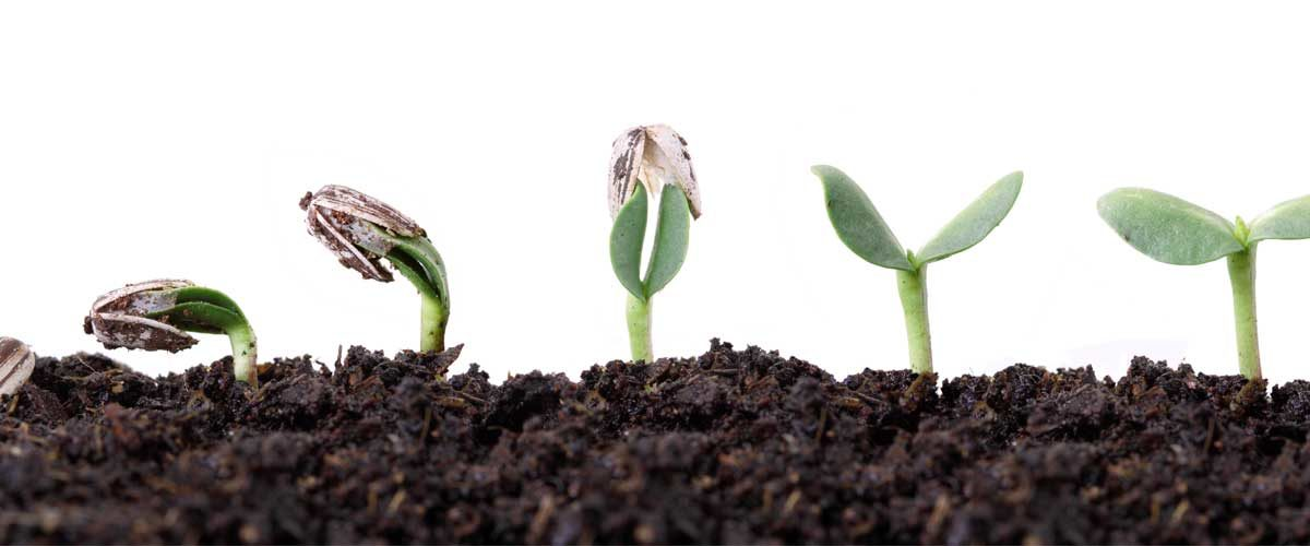 A growing plant which represents esg investing explained