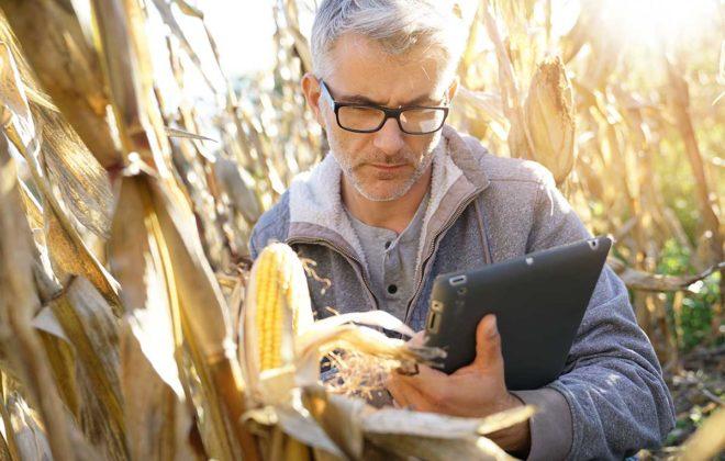 farmer in corn field at harvest