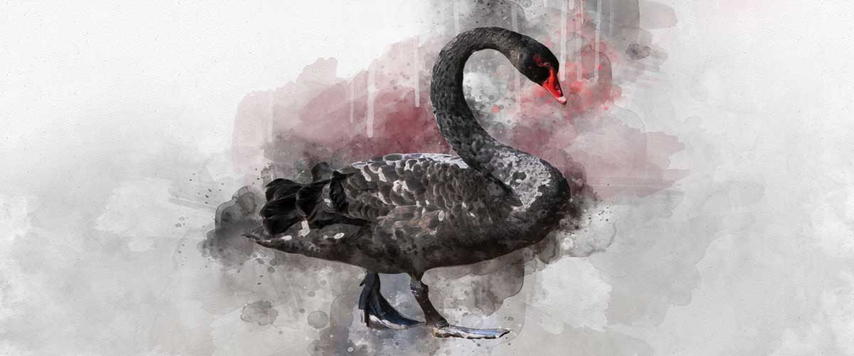 A water color illustration of a black swan representing economic black swans.