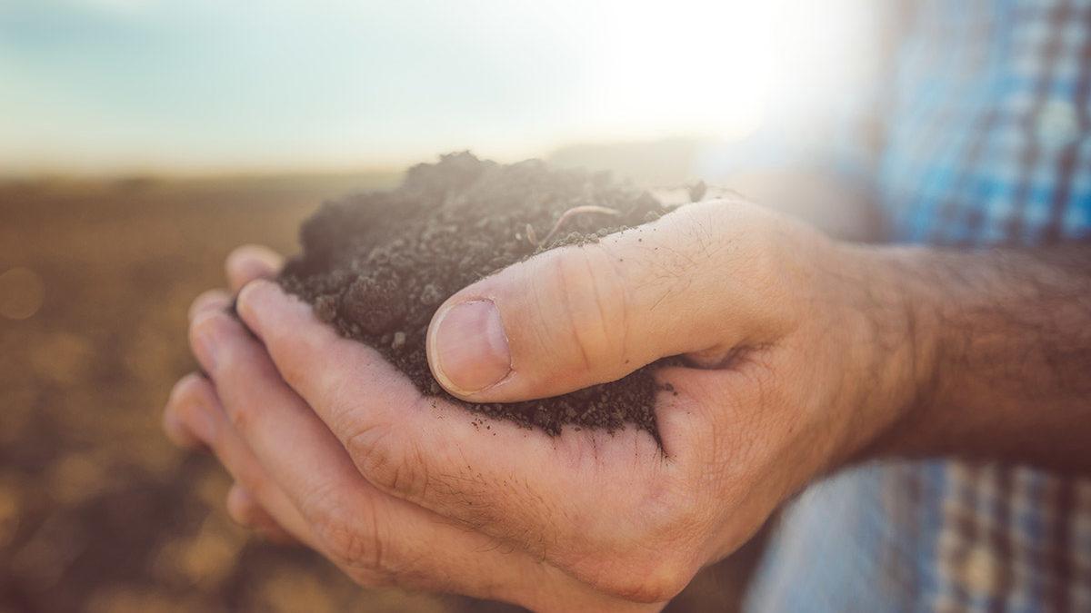 farmer holds soil in hands