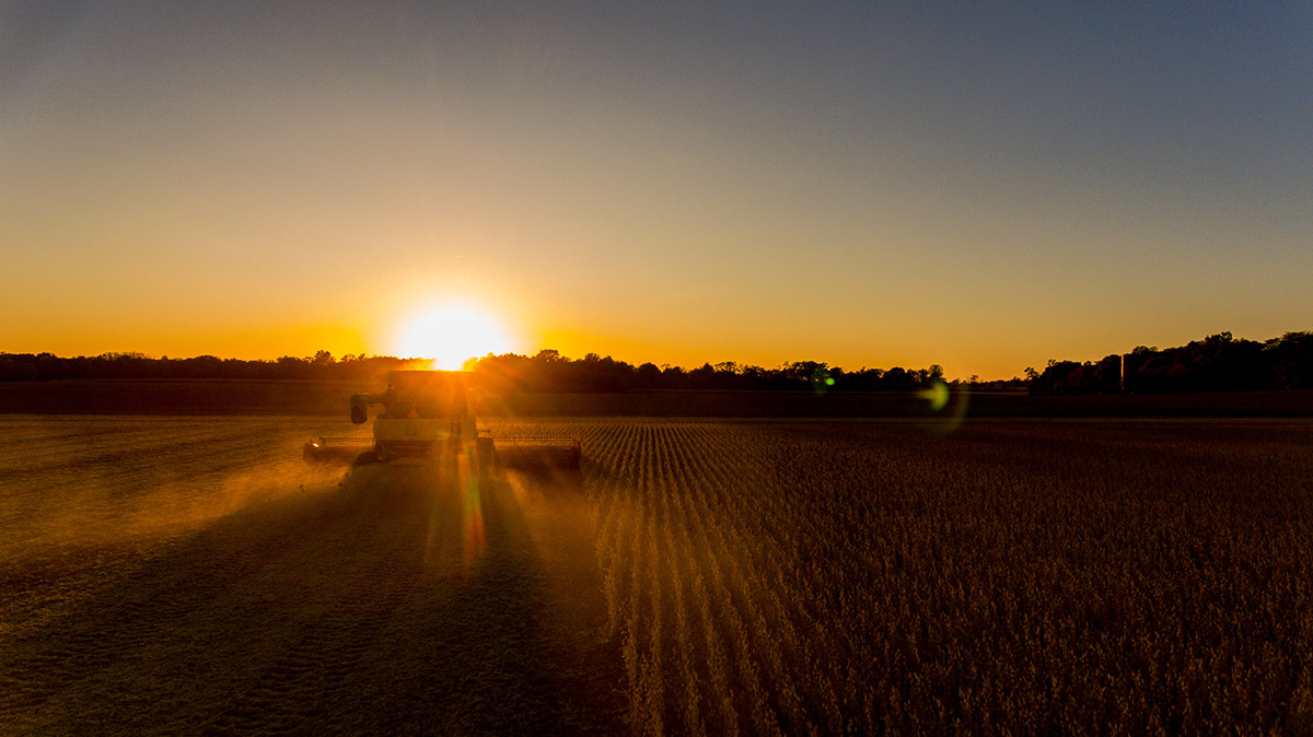 soybean harvest agribusiness