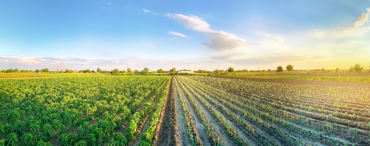 A field of crops require a strong commodity marketing plan.